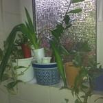Bei #EG13 stehen leider auch Pflanzen im Weg. Deshalb müssen alle ein bisschen zusammenrücken