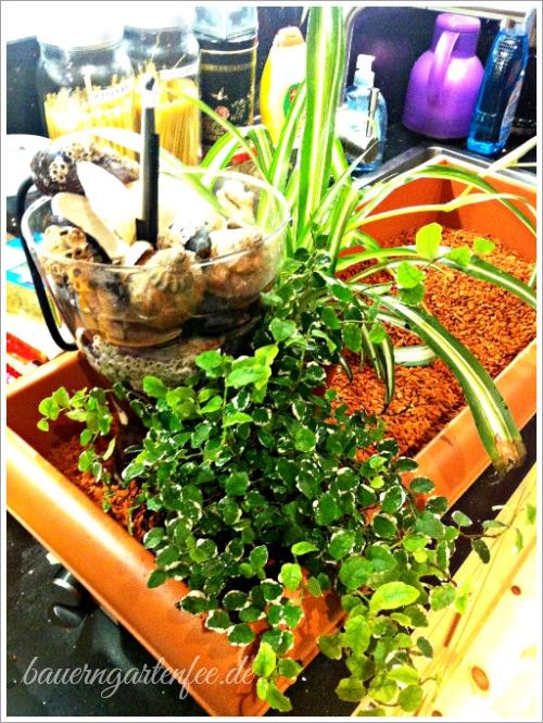 Anordnen von Mini-Brunnen und Pflanzen im Blumenkasten.