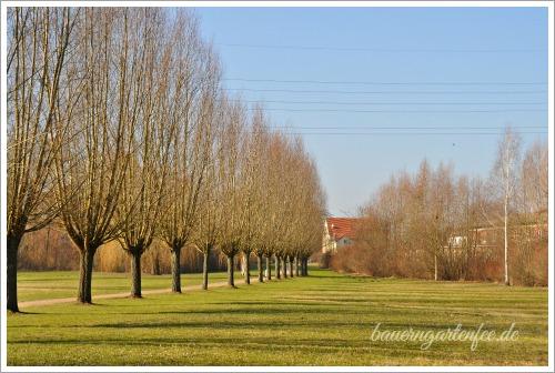 Allee am Oder-Havel-Kanal im brandenburgischen Hennigsdorf.