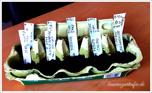 Tomatenaussaat im Einerkarton mit Sortenschildchen aus zerschnittenen Joghurtbechern. Foto: Petra A: Bauer