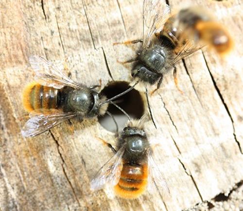 Bienen. Foto: Silke Stach