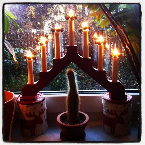 Eine andere Art von Weihnachtskaktus. Foto: Petra A. Bauer