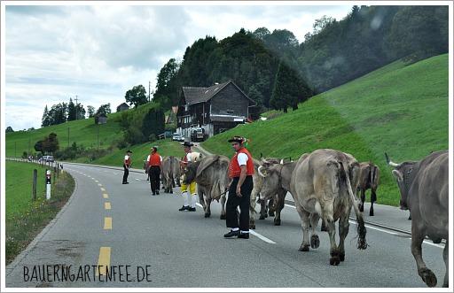 Almabtrieb in Appenzell. Foto: Petra A. Bauer