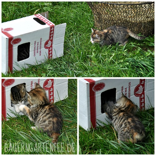 Appenzeller Babykatzen. Foto: Petra A. Bauer 2014