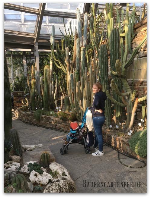 Kaktusgiganten im Botanischen Garten Berlin