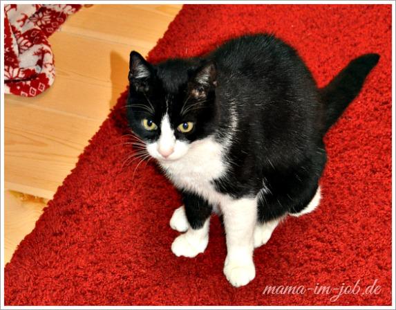 Monsieur Katz auf unserem Wohnzimmerteppich