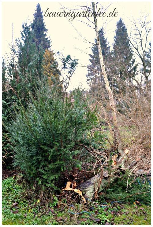 Der Sturm hat unseren Birnbaum gefällt. Foto: Petra A. Bauer 2015