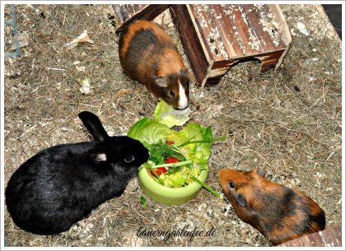 Fütterungszeit für unsere Tierchen. Foto: Petra A. Bauer 2015