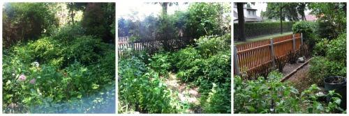 Vorgarten unbearbeitet, bisschen bearbeitet, Hecke ganz weg.