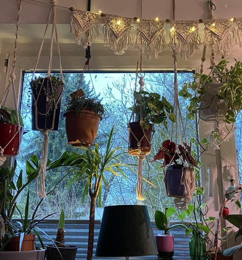 Pflanzen am Wohnzimmerfenster im April 2021