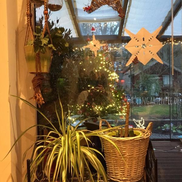 Pflanzen am Küchenfenster. Foto: Petra A. Bauer 2018.