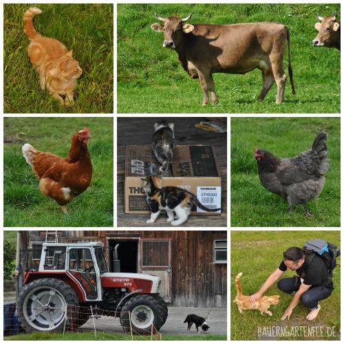 Tiere im Appenzeller Land. Foto: Petra A. Bauer