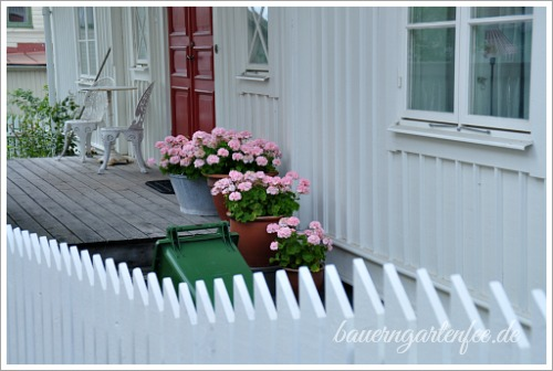 Die typischen rosafarbenen Pelargonien in Schweden