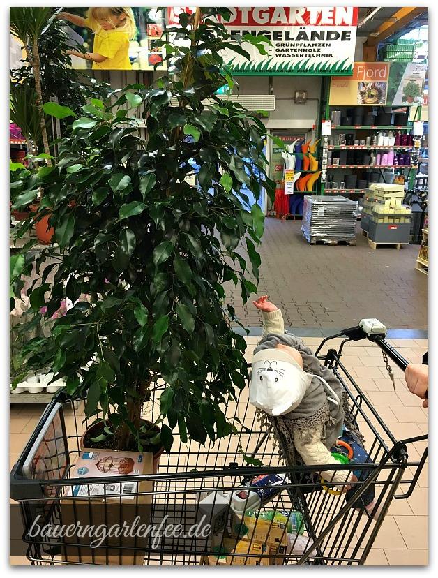 Ficus-Shopping, Foto: Petra A. Bauer 2016