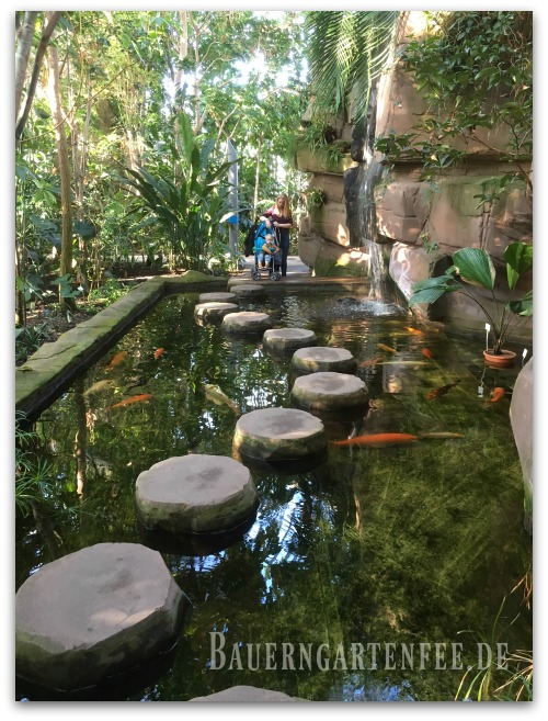 Koi-Teich im Tropenhaus