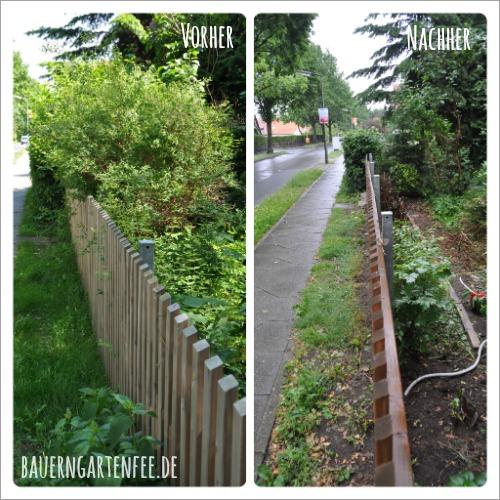 Die Hecke im Vorgarten vor und nach dem Radikalschnitt